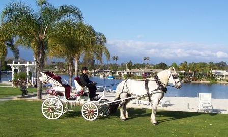 white Percheron draft horse and white carriage on a green lawn with Lake San Marcos in the background