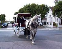 Percheron draft horse pulling a white carriage with the top up in Lakeside, CA